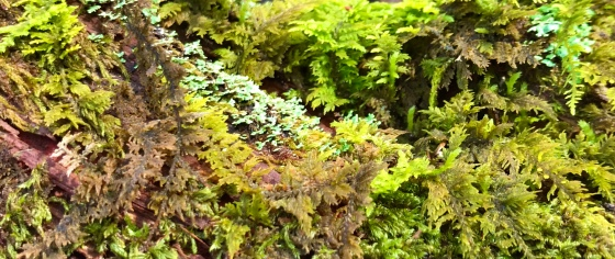 Close up view of mosses and lichens in a fallen branch that resembles the edge of a primitive jungle