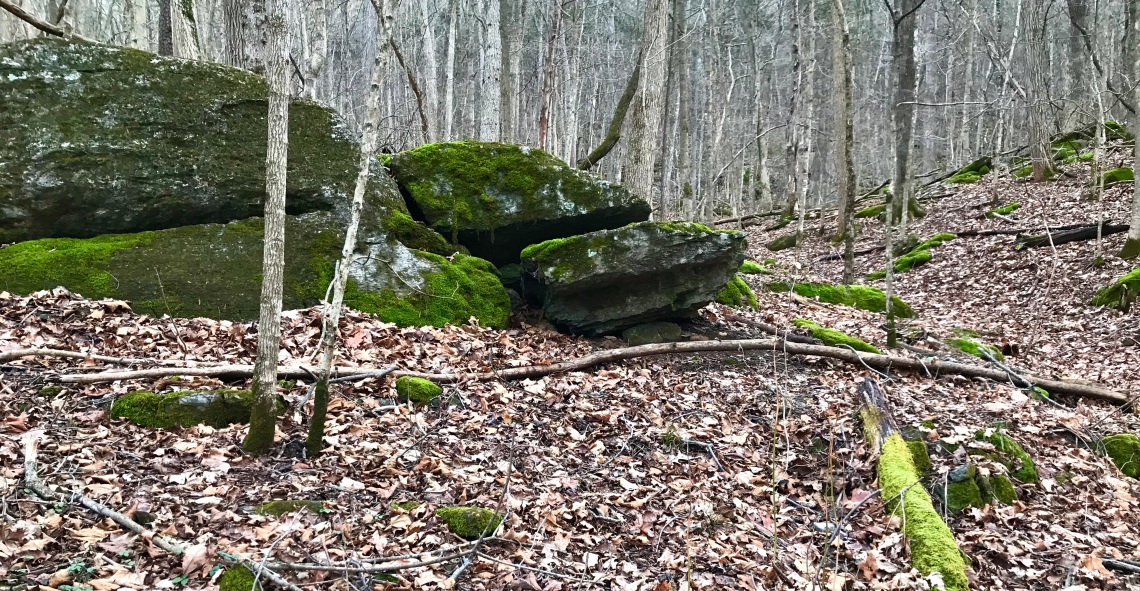 A large limestone outcrop festooned with moss on a gray forest floor in in the Shenandoah Valley of Virginia during January