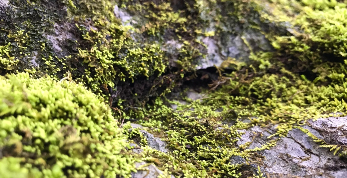 Close up view of bright acid green moss on a rock outcrop that resembles the entrance to a cave in a peculiar forest