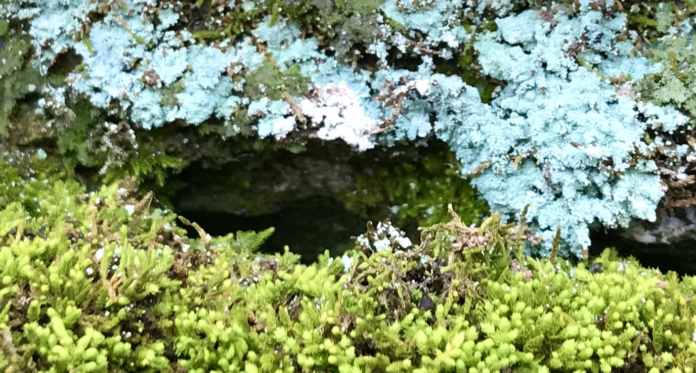 Entrance to a miniature cave surrounded by verdant mosses and blue green lichen in an Appalachian forest photographed by MJ Seal